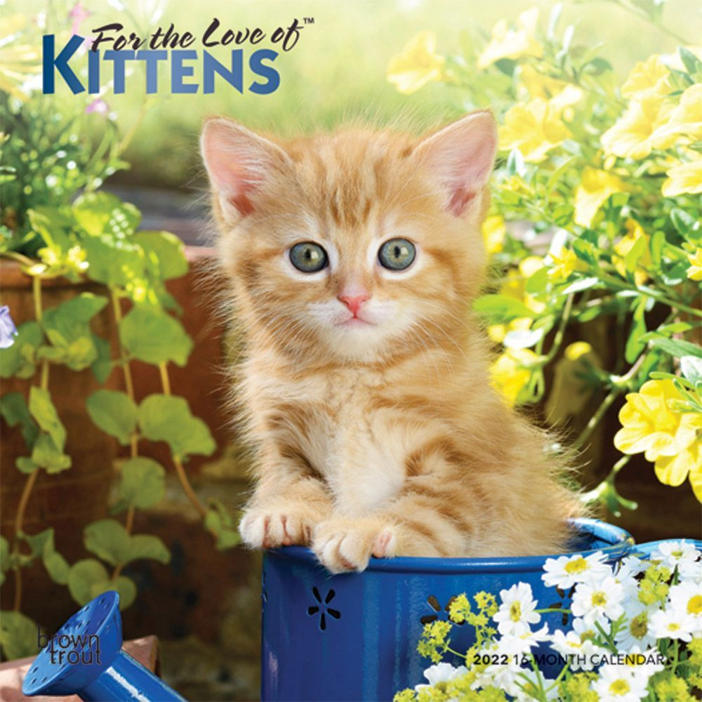 Butterflies of North America 2018 Wall Calendar