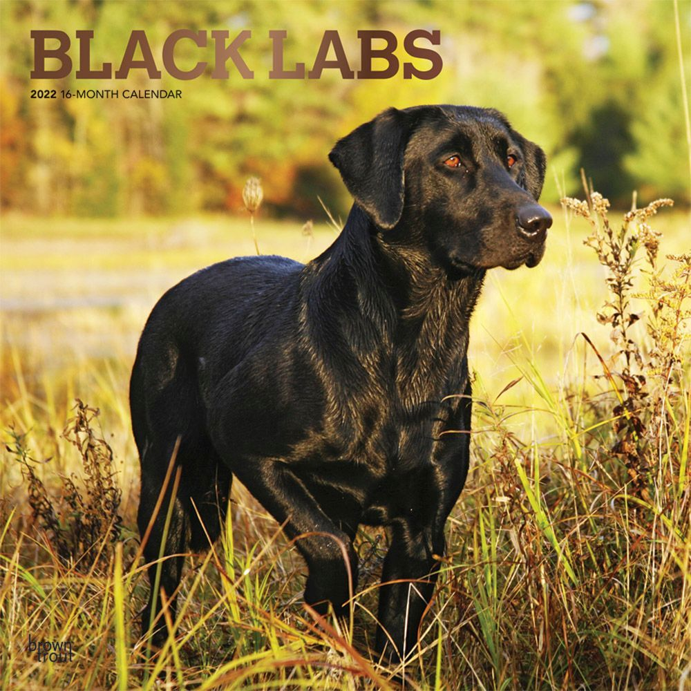 California Nature 2020 Wall Calendar