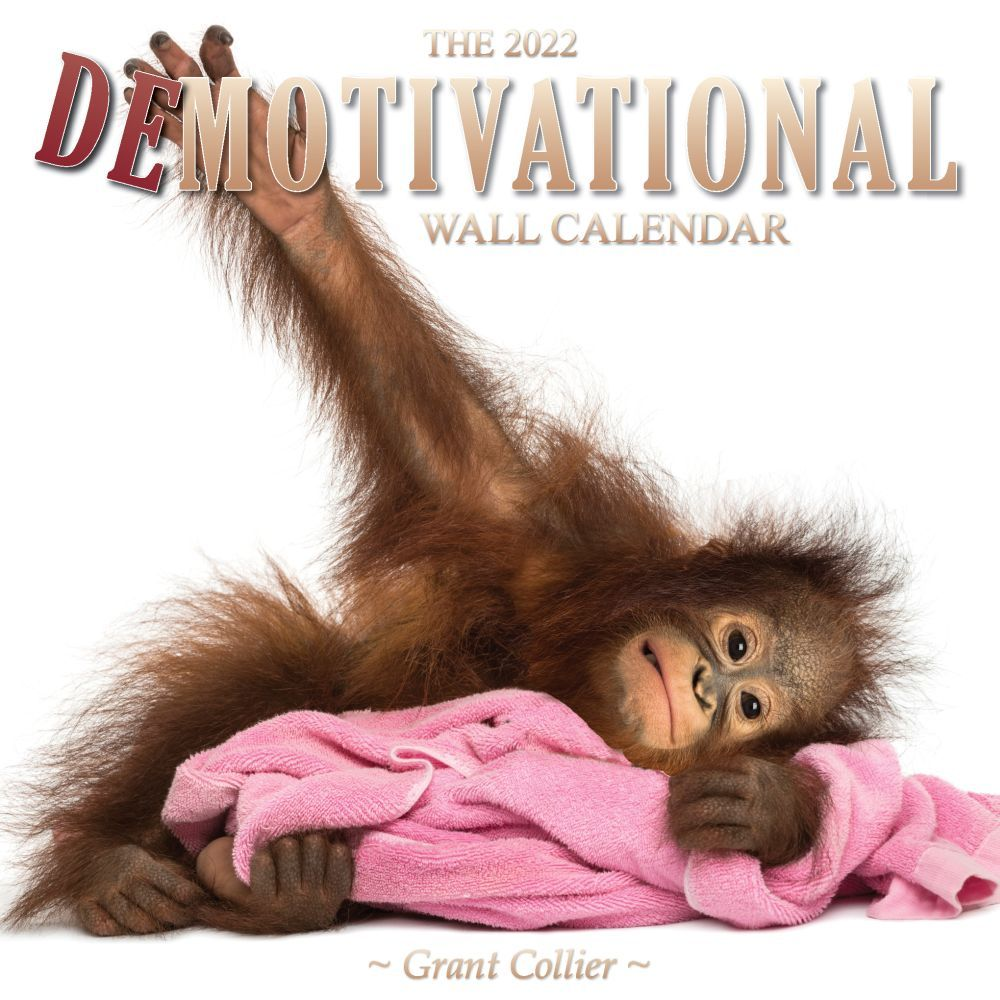 American Beauties 2019 Wall Calendar