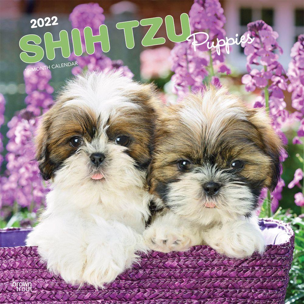 Ohara Shoson 2020 Mini Wall Calendar