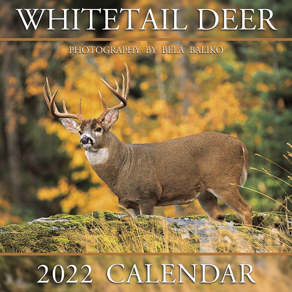 Dog Nose Best 2019 Wall Calendar