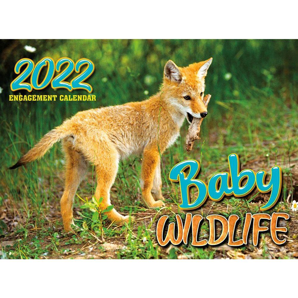 Florida State Seminoles 2019 Desk Calendar