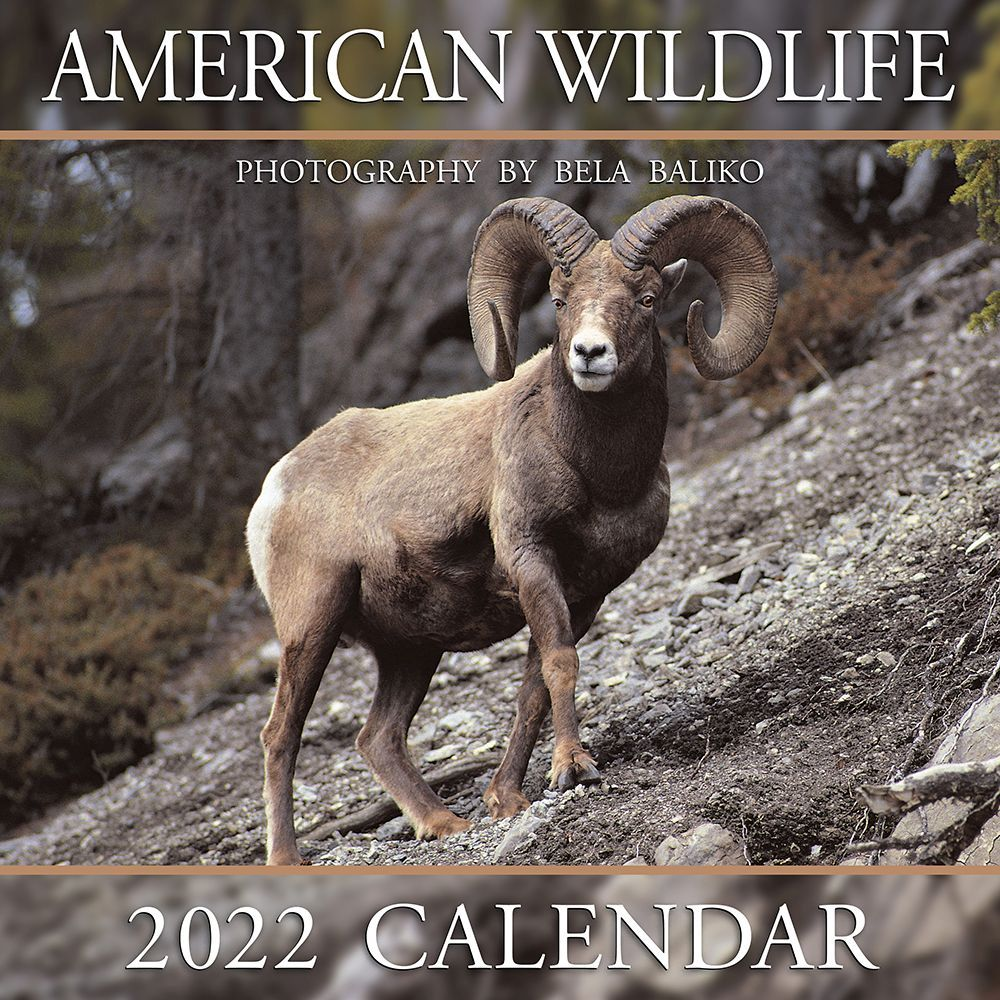 Blooms by Nel 2020 Wall Calendar