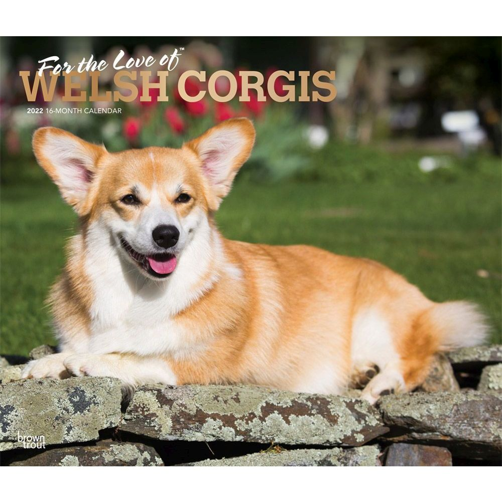 Baby Animals Wall Calendar